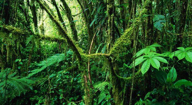 Посещение джунглей и тропического леса: меры предосторожности